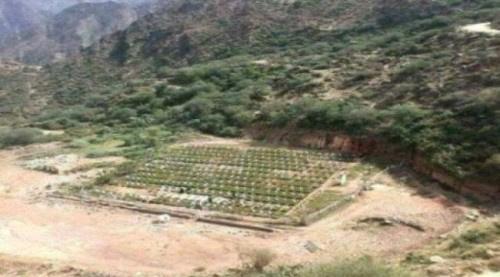 صحيفة دولية: مليشيا الحوثي أسست 600 مقبرة لقتلاها