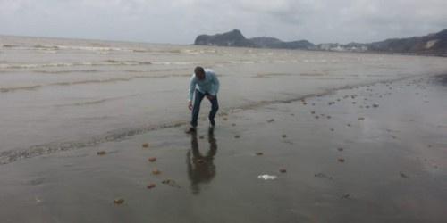 حماية البيئة تُعلّق بشأن ظهور الميدوزاء على ساحل أبين