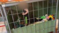 حادثة صادمة.. العثور على طفل صغير داخل قفص محاطا بالثعابين