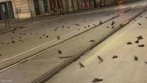 مجزرة في سماء إيطاليا بعد ليلة رأس السنة
